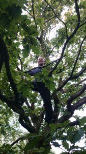 Yogi Cho Old Oa-Ki Tree3